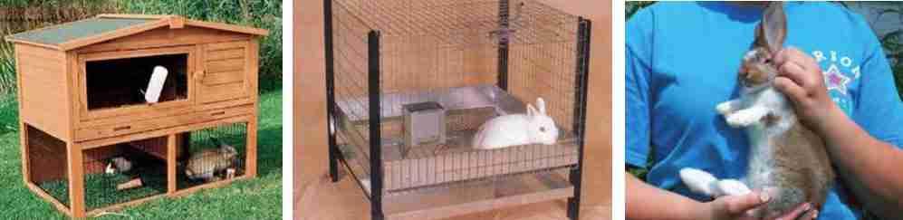 محل نگهداری خرگوش و طریفه صحیح بغل کدن خرگوش