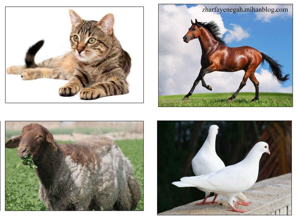 عکس حیوانات-نگاهی به ژرفای نگاه