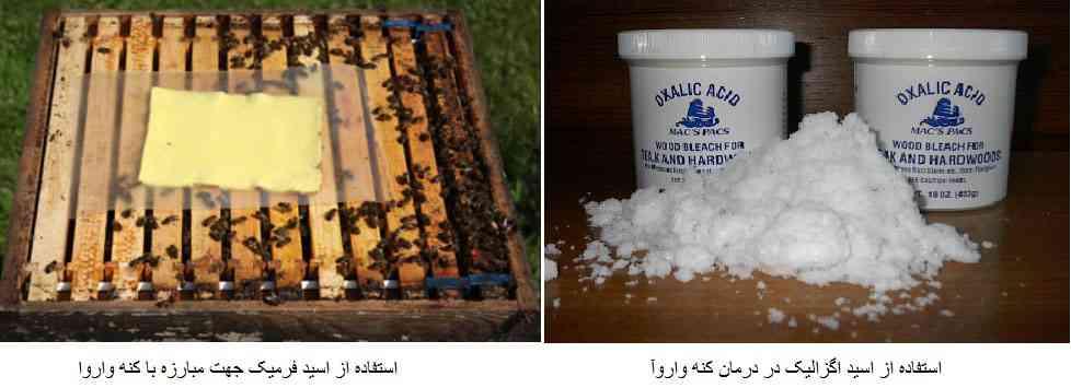 استفاده از اسید اگزالیک و اسید فرمیک در درمان کنه واروآ