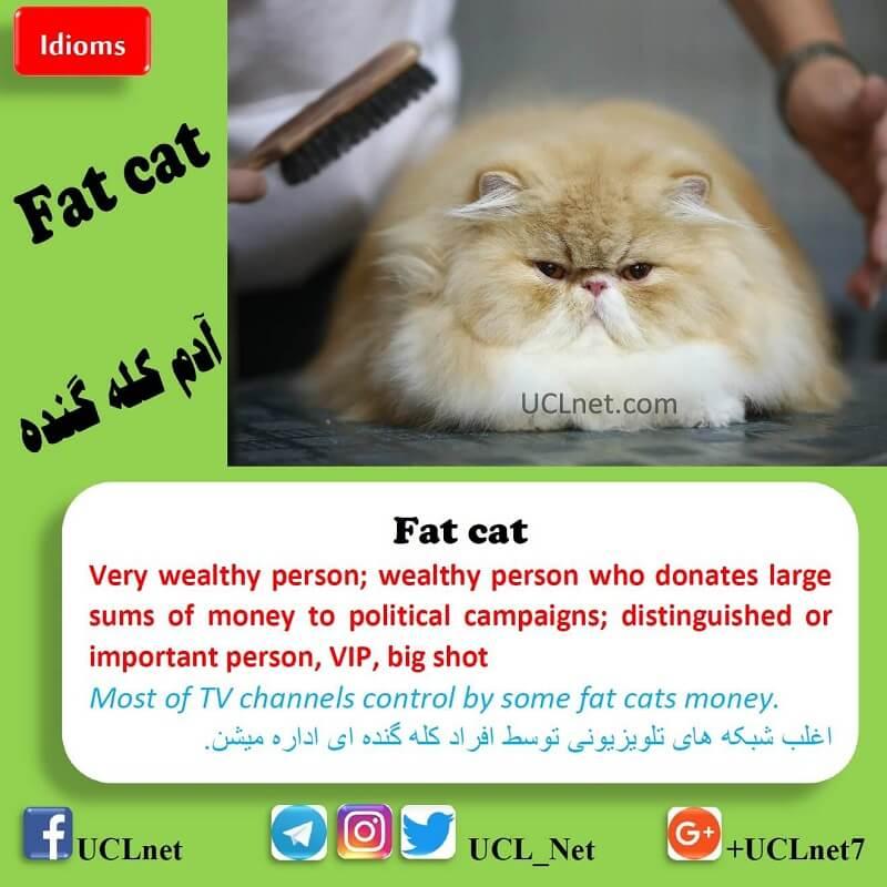آدم کله گنده – Fat cat – اصطلاحات زبان انگلیسی – English Idioms