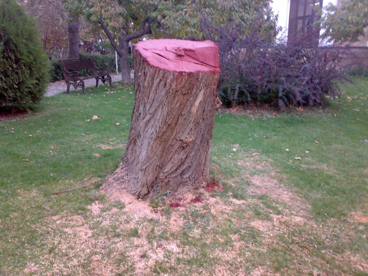 درخت بید مجنون؛ درخت خاطره انگیز دانشگاه امام صادق علیهالسلام