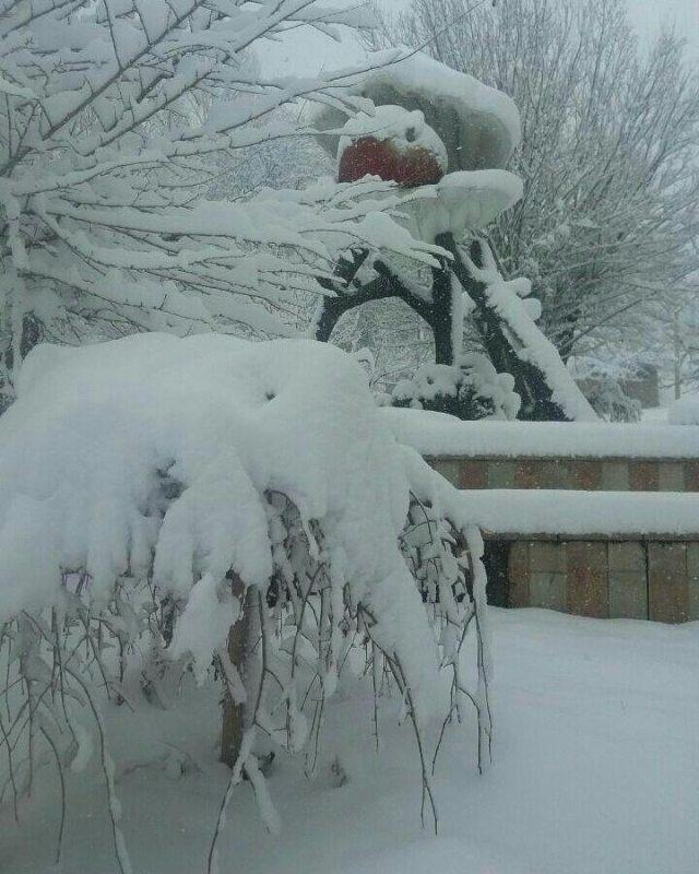 برف زنوز