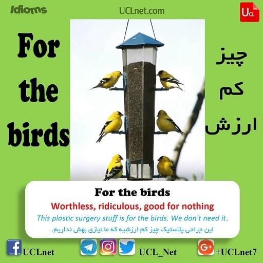 چیز کم ارزش – For the birds – اصطلاحات زبان انگلیسی – English Idioms