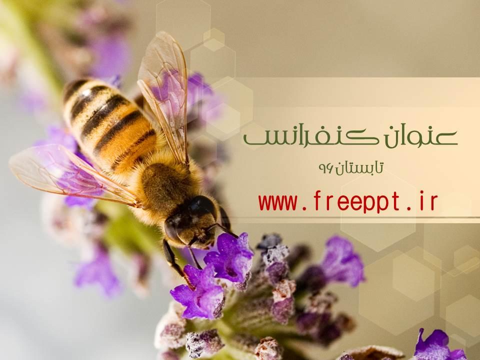 قالب پاورپوینت  زنبور عسل 2