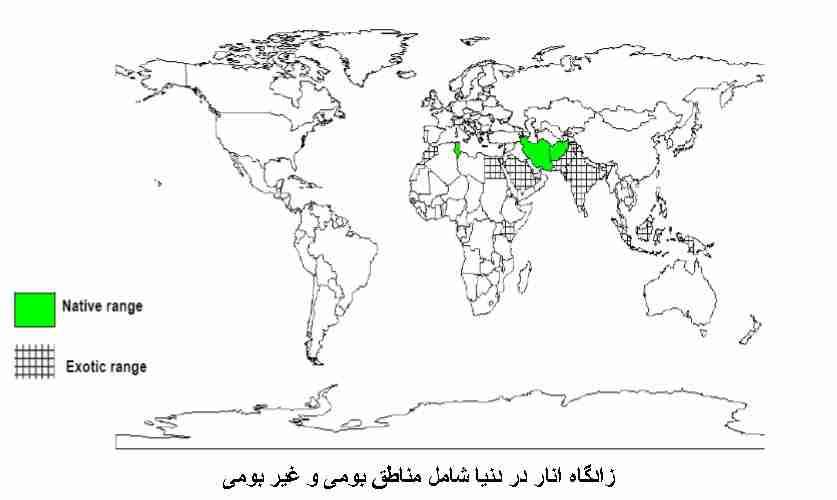 زادگاه انار در دنیا شامل مناطق بومی و مناطق غیر بومی