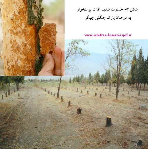 آثار خسارت پوستخوارها روی درختان پارک چیتگر