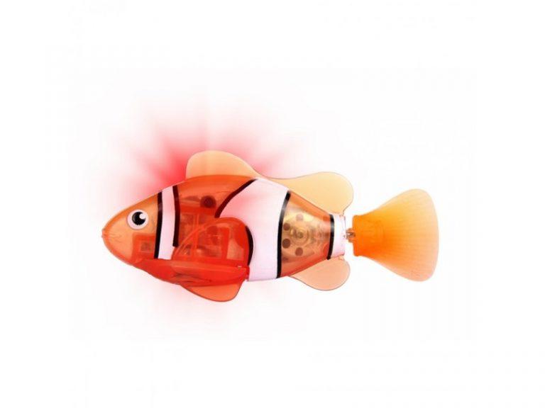 اکواریوم ماهی جینو