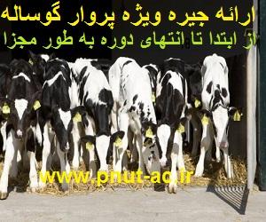 جیره ویژه پرواربندی گوساله