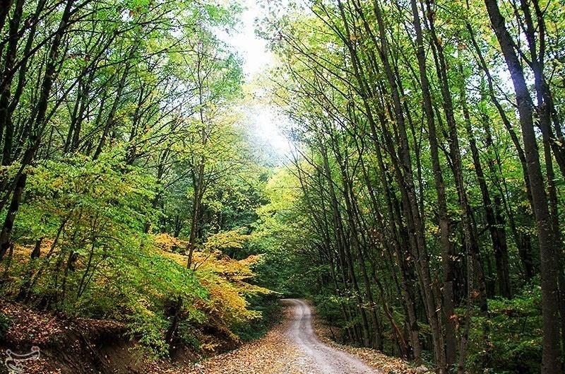 پاییز در جنگل دشت شاد