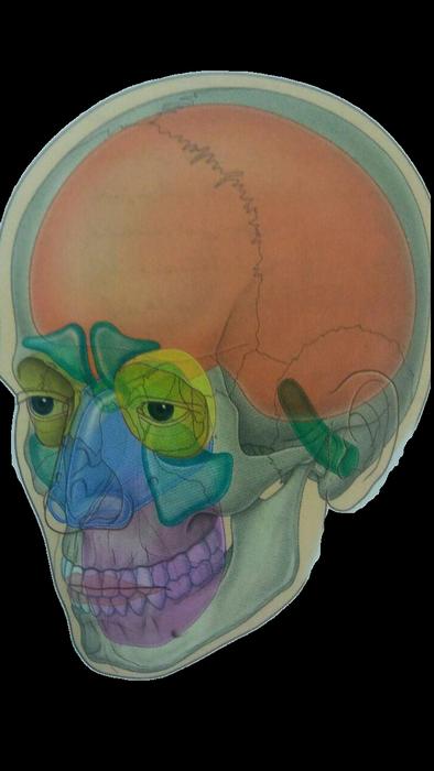 دانلود اپلیکیشن آناتومی سر و گردن (1)