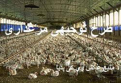 دانلود طرح توجیهی مرغ گوشتی سال 96