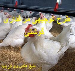دانلود طرح توجیهی مرغداری گوشتی 20 هزار قطعه ای