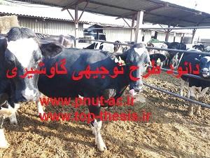 طرح توجیهی اماده گاو شیری 50 راسی ورد