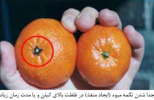 جدا شدن تکمه میوه در غلظت بالای اتیلن