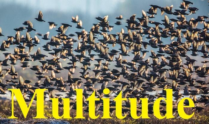 تعداد زیاد – Multitude – آموزش لغات کتاب ۵٠۴ – English Vocabulary – کدینگ لغات ۵٠۴