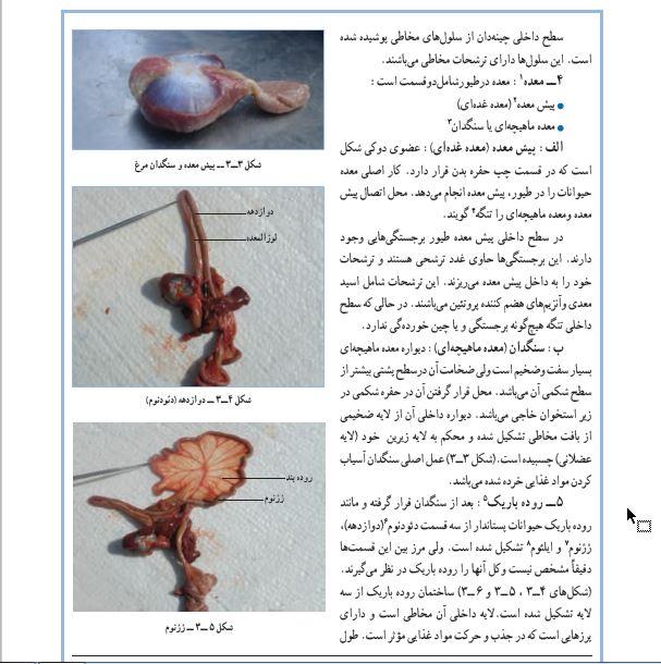 دانلود کتاب تشریح و فیزیولوژی طیور pdf ، دانلود رایگان کتاب تشریح و فیزیولوژی طیور pdf