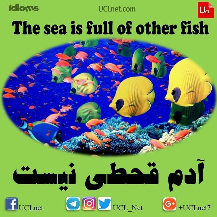 آدم قحطی نیست – The sea is full of other fish – اصطلاحات زبان انگلیسی – English Idioms