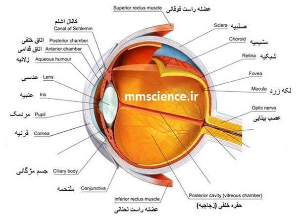 معرفی قسمت های چشم