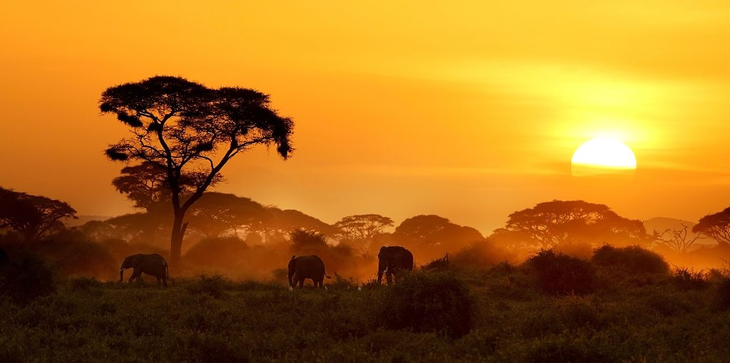 پارک ملی کروگر در تور آفریقای جنوبی