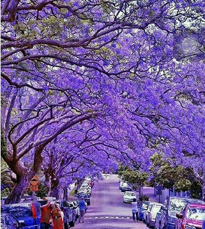 خیابان های پرتوریا آفریقای جنوبی
