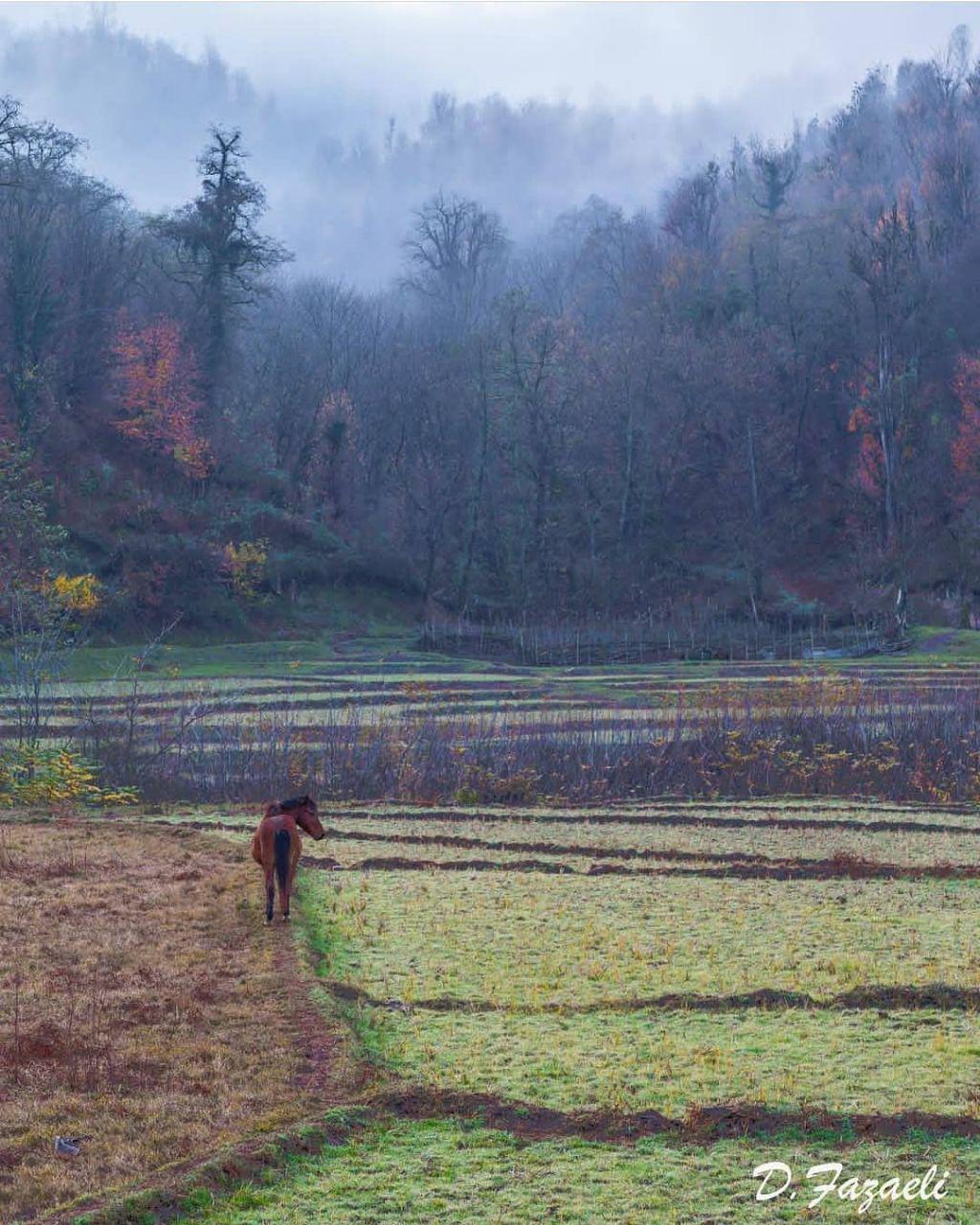 جاذبه های گردشگری رودبار و روستای بالابراگور وفرارود