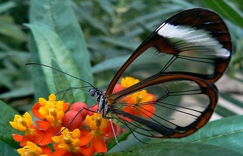 وقتی خدا دست به قلم شد؛ نگاهی به زیباترین حشرات زنده دنیا