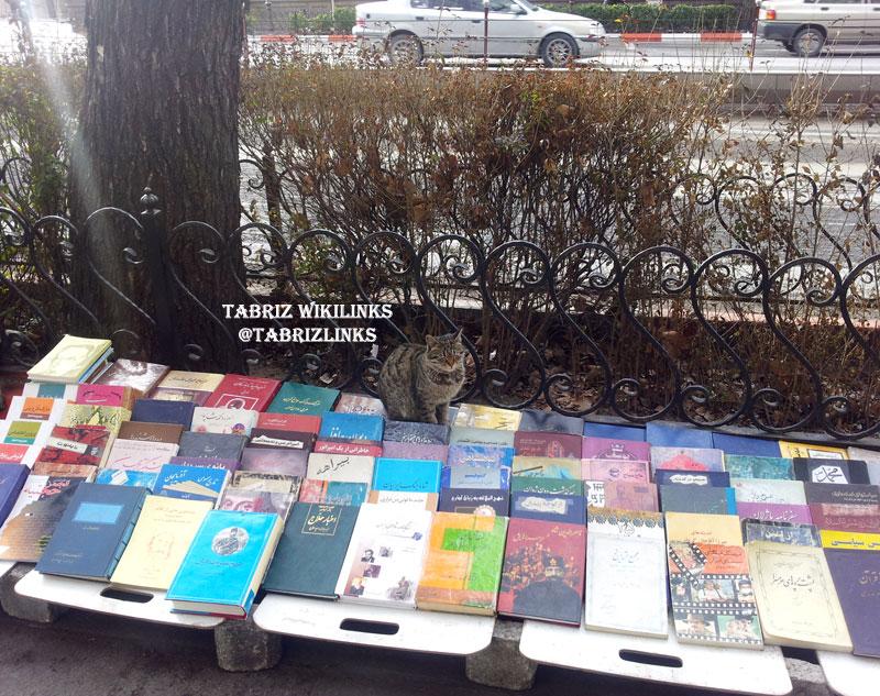 گربه کتابفروش
