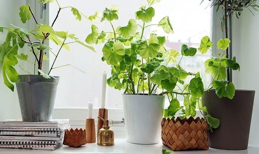 با پانزده گیاه که برای اتاقهای گوناگون خانه مناسب هستند آشنا شوید