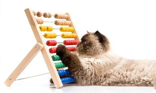 آیا حیوانات نیز مانند انسان ها قدرت شمارش اشیاء اطرافشان را دارند؟