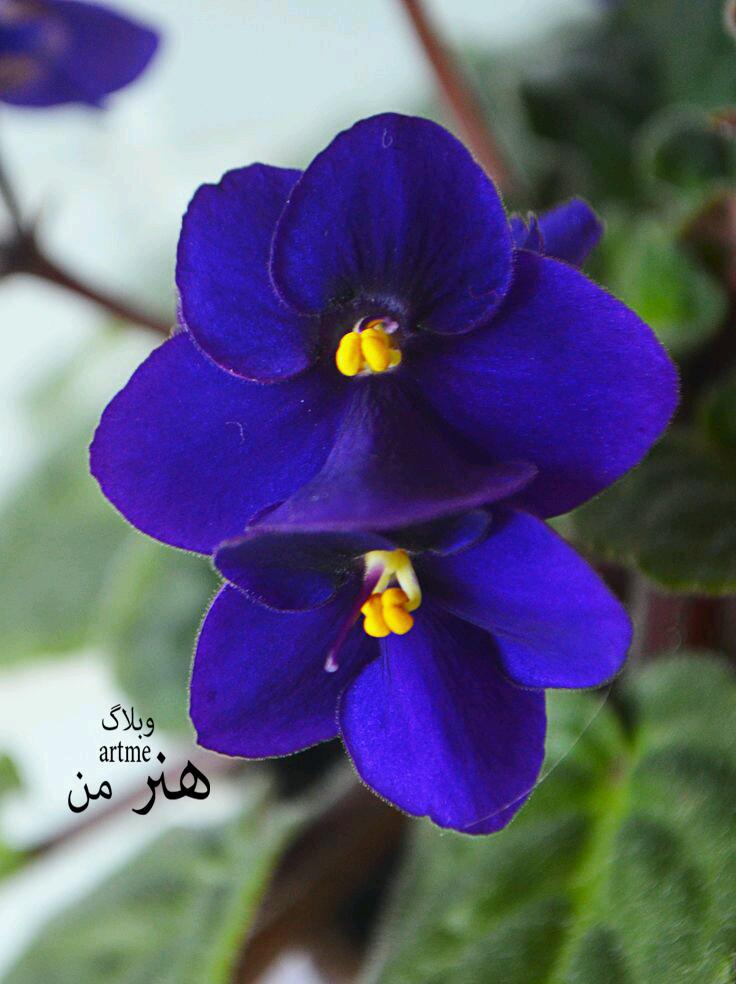 http://s8.picofile.com/file/8319989534/1477308e56a98d49896cc0c412907dae.jpg