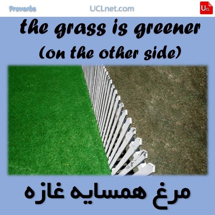 مرغ همسایه غازه – The grass is greener on the other side – ضرب المثل های انگلیسی – English Proverb