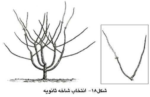 انتخاب شاخه ثانویه