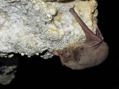 لانه خفاش چه خاصیتی دارد