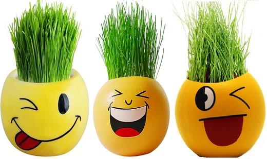 آموزش کاشت انواع مختلف سبزه هفت سین نوروز