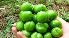 چه کساني نمي توانند گوجه سبز بخورند ؟