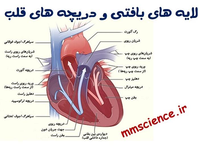 لایه های بافتی و دریچه های قلب