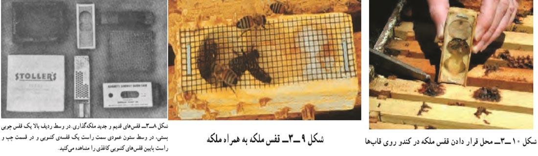 نحوه معرفی زنبور ملکه به کندو