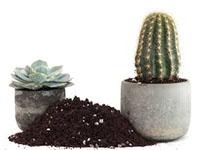 http://s8.picofile.com/file/8326310892/cactus_khak.jpg
