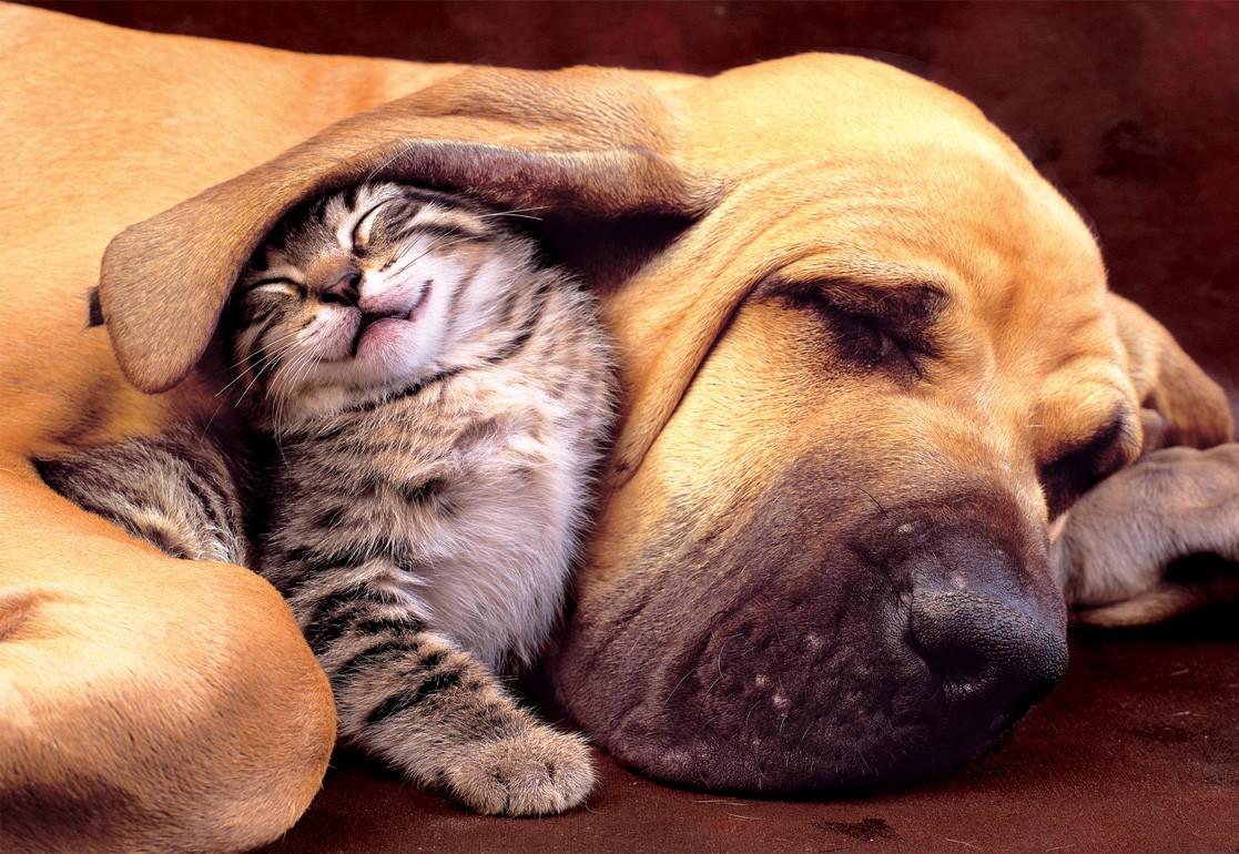 سگ و گربه دوست سگ و گربه