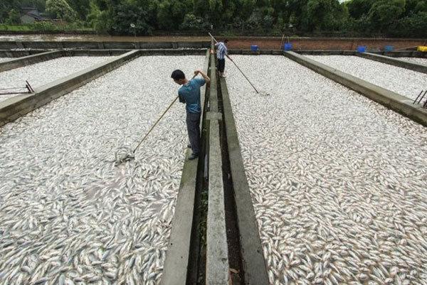 واقعیاتی در باره صنعت پرورش ماهی