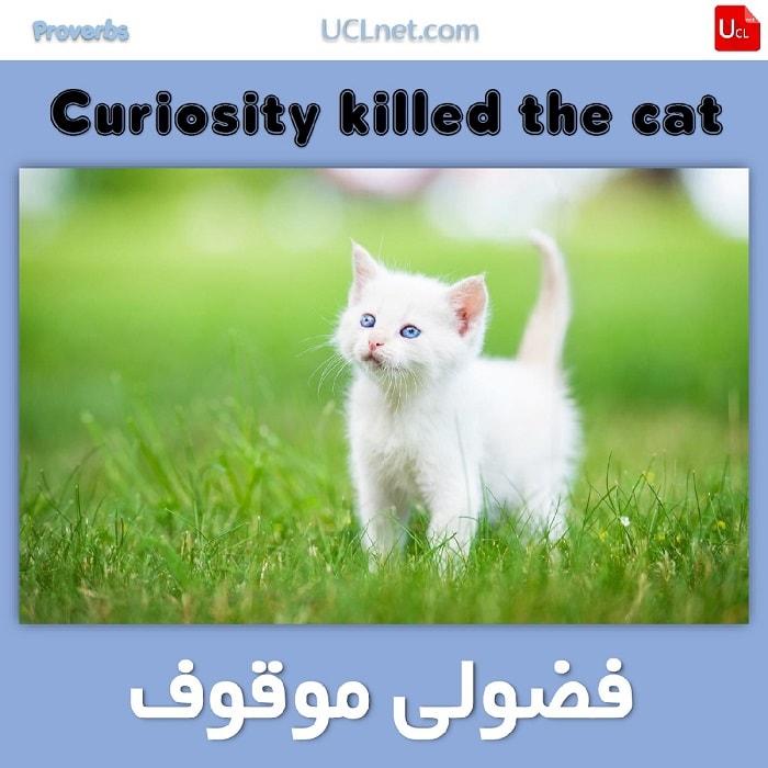 فضولی موقوف – Curiosity killed the cat – ضرب المثل های انگلیسی