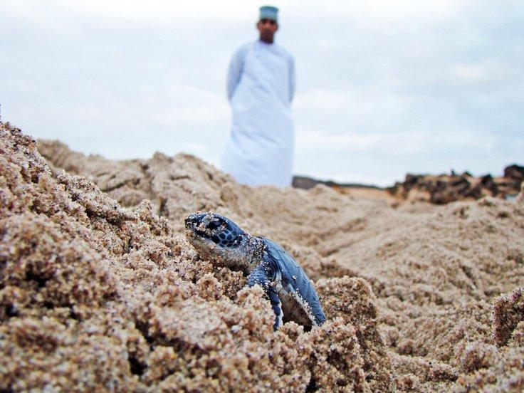 ۱۰ مکان برتر جهان برای تماشای لاکپشتها