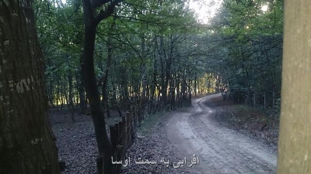 طبیعت تابستانۀ دارابکلا