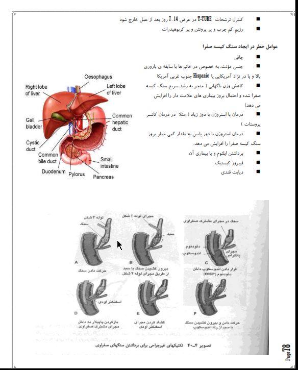 دانلود جزوه آناتومی و فیزیولوژی غدد درون ، پاورپوینت جزوه آناتومی و فیزیولوژی غدد درون دانلود رایگان رشته پزشکی عمومی فایل ppt نمونه سوالات جزوه آناتومی و فیزیولوژی غدد درون
