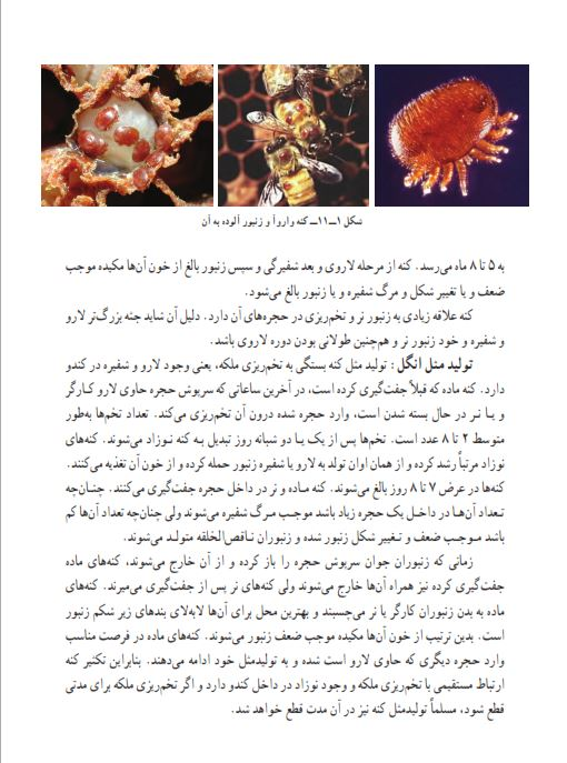 دانلود کتاب پرورش زنبور عسل برای تازه کاران pdf آموزش پرورش زنبور عسل