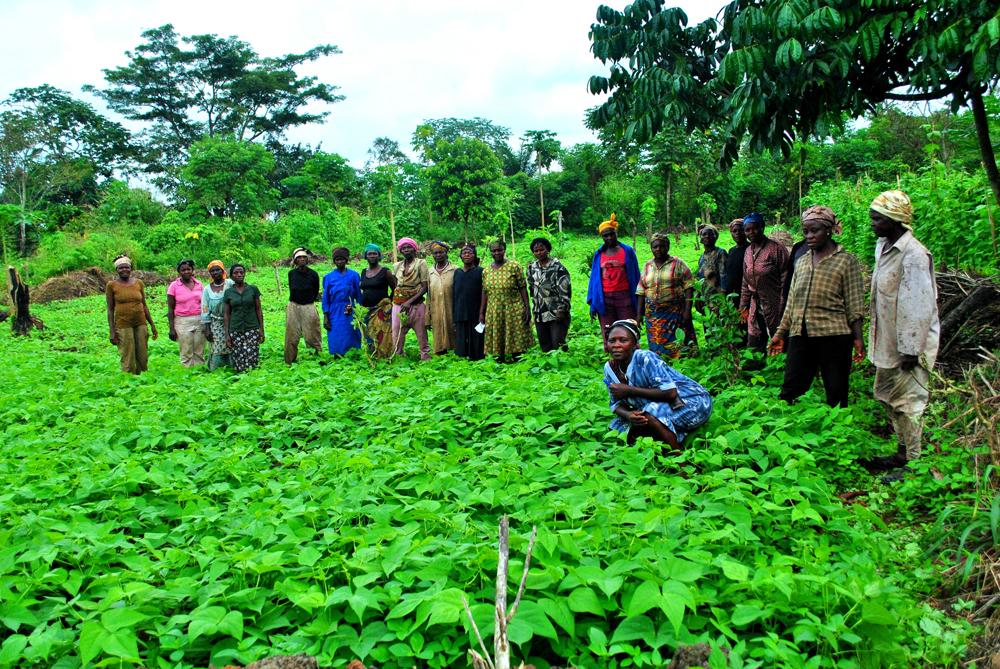 اقتصاد کامرون