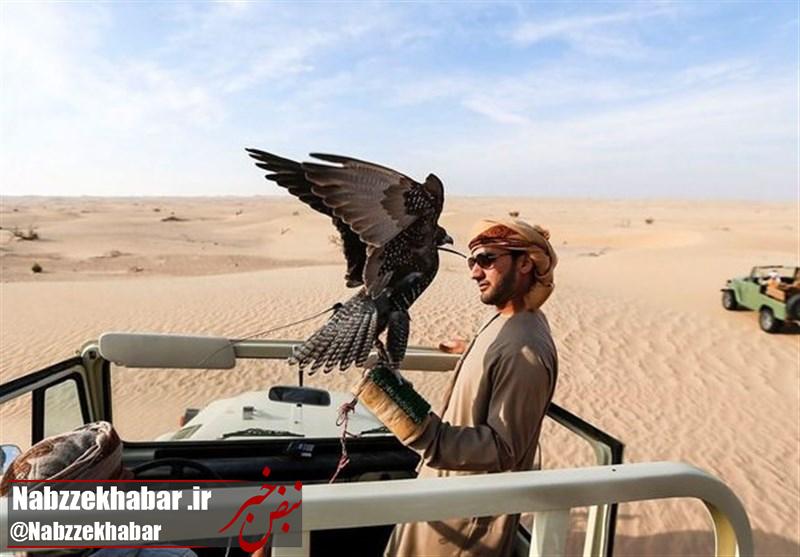 """قاچاقچیان پرنده """"شاهینهای گیلان"""" را به شیخ نشینهای خلیج فارس میفروشند"""