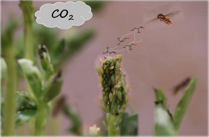 insects_09_00047_ag.png