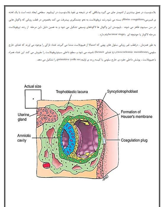 دانلود جزوه جنین شناسی عمومی pdf جزوه ای کامل ، دانلود رایگان کتاب جنین شناسی عمومی