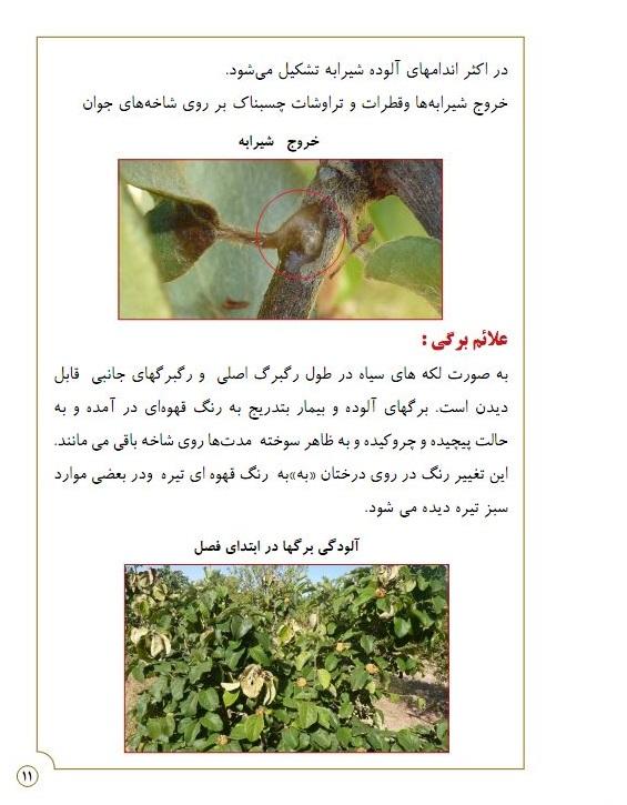 دانلود مقاله در مورد بیماری آتشک در درختان میوه پی دی اف (pdf)